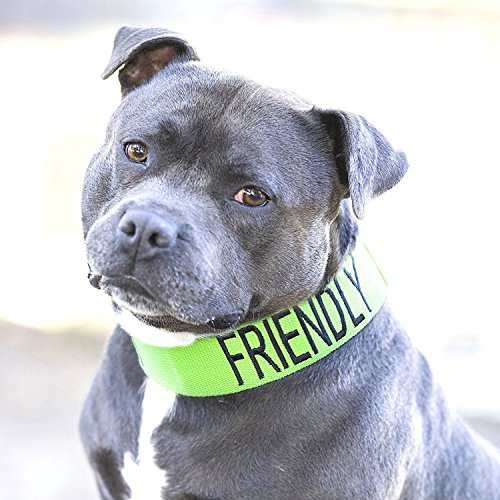 (FRIENDLY Green Color Coded L-XXL Semi-Choke Dog Collar (Known As Friendly) PREVENTS Accidents By Warning Others of Your Dog in Advance)
