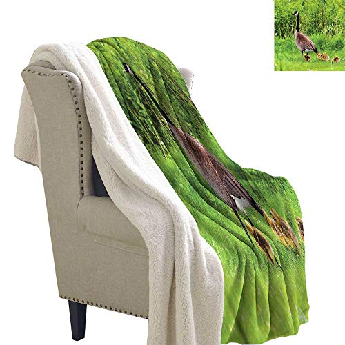 AndyTours Wool Blanket Geese Canadian Chicks on The Grass Autumn and Winter Thick Blanket W59 x L47