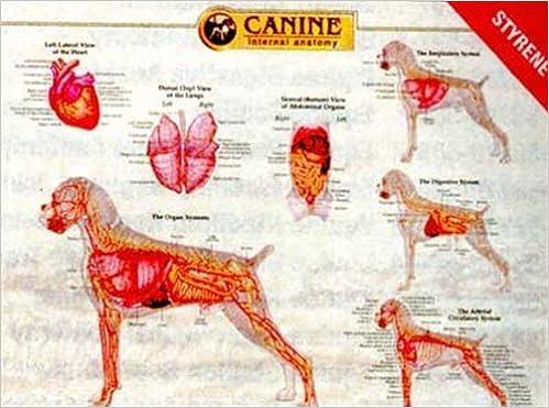 Canine Internal Organ Anatomy Chart: 9781587795077: Medicine ...