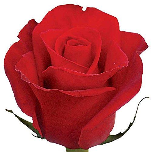 Farm Fresh Cut Flowers - Freedom Roses (2 Dozens)