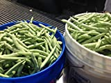 1,650 Genuine White 1/2 Runner Green Bean Seed. Approx. 1 lb. Heirloom!