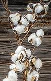 Richland Faux Cotton Boll Garland 6'