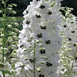 50+ Delphinium White Magic Fountain aka Larkspur Flower Seeds