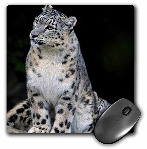 3dRose LLC 8 x 8 x 0.25 Inches Snow Leopard, Panthera Uncia, Asia Andres Morya Hinojosa Mouse Pad (mp_132849_1)