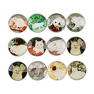 12pcs Beautiful Glass Refrigerator Magnets, Pretty Fridge Magnets For Office Cabinets Whiteboards, Perfect Decorative Magnets For Home (Cat)