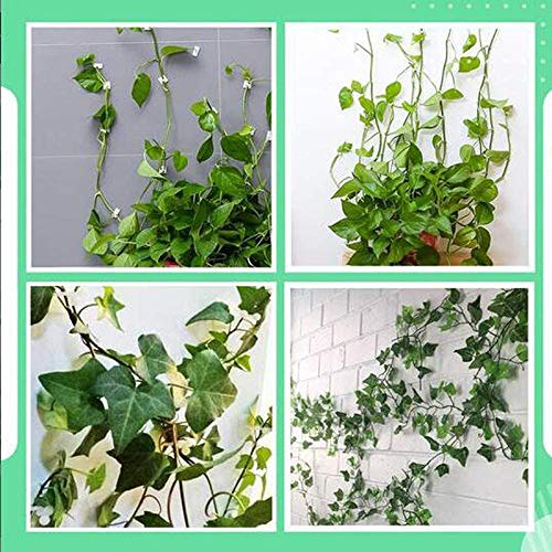 10//20//50Pcs Invisible Wall Vines Fixture Wall Sticky Hook Vines Fixing  Clips