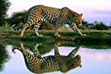 CHOIS Custom Film CF3321 Animal Leopard Glass Window Privacy Frosted DIY Sticker 3' W by 2' H