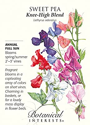 Knee-Hi Blend Sweet Pea Seeds - 2 grams - Annual