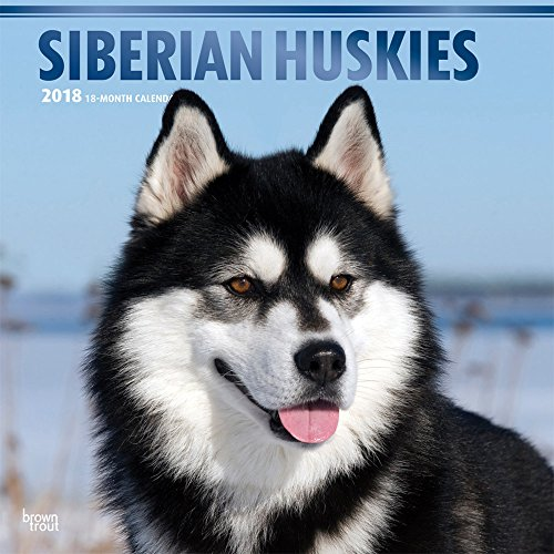 Siberian Huskies 2018 12 x 12 Inch Monthly Square Wall Calendar with Foil Stamped Cover, Animal Dog Breeds Husky