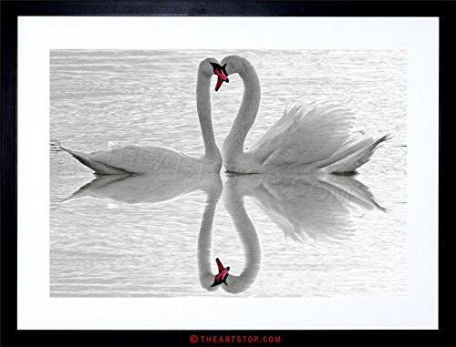 (The Art Stop Photo Composition Swans Love Black White Romance Framed Print)