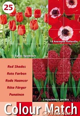 Colour harmony bulbs packs with 25 mixed spring flower bulb colour harmony bulbs packs with 25 mixed spring flower bulb varieties red mightylinksfo