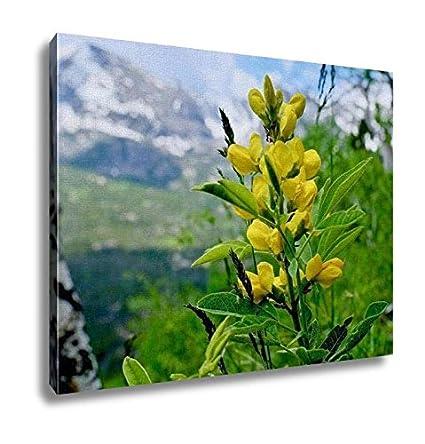 Amazon ashley canvas yellow wildflowers of colorado yellow ashley canvas yellow wildflowers of colorado yellow banner flowers thermopsis rhombifolia home decoration office mightylinksfo