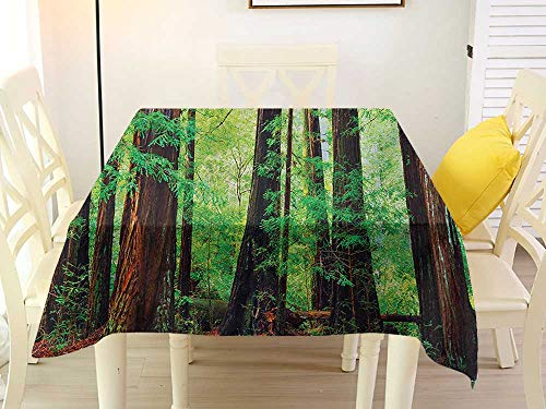 L'sWOW Tablecloth Cover Round Table Rectangle Woodland Redwood Trees Northwest Rain Forest Tropical Scenic Wild Nature Lush Branch Green Redwood Western 36 x 36 Inch