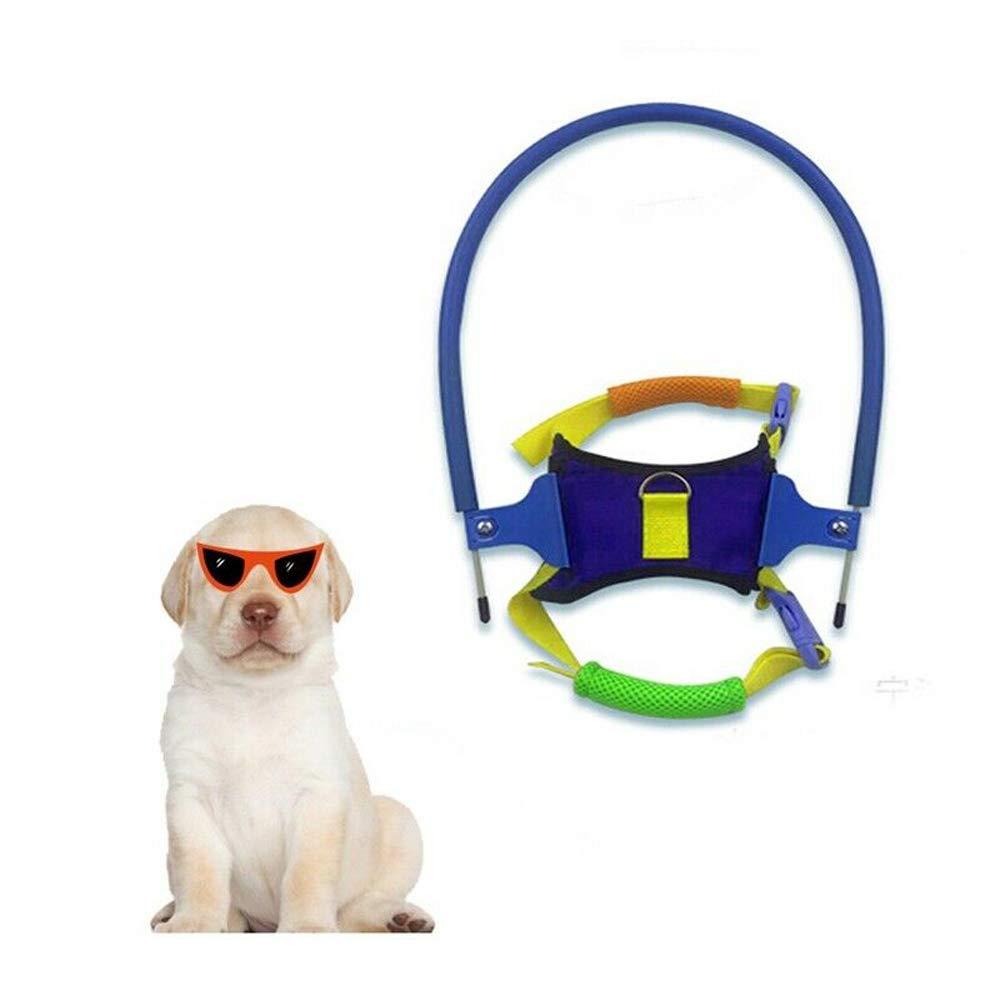 Plifet Arnés de Seguridad para Perros Ciegos: Amazon.es: Productos ...