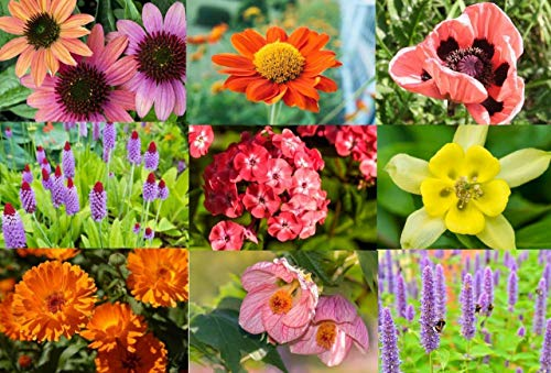 Mixed Perennial Flowers Seeds, English Flowers 2000 +Rainbow of Colours