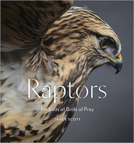 BIRDS OF PREY - BOOKS 51j-8oTl4bL._SX468_BO1,204,203,200_