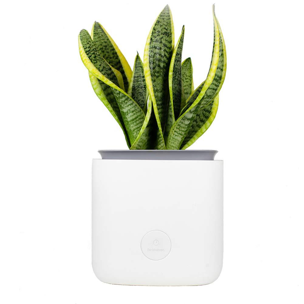 For Bluever Flower Pot Air Purifier for Home