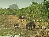 Sri Lanka: Monsoon Island