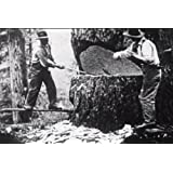 Lumber Industry History Pacific Northwest: Felling Forest Giants (1920s) [DVD] - Logging in the Early Days of the Giant Redwood Sequoias