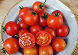 Harley Seeds 30+ Dwarf Red Robin Tomato Seeds, ORGANICALLY Grown Heirloom Non-GMO, Sweet, Low Acid, Determinate, Open-Pollinated Profilic
