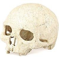 fitTek® Refugio Cráneo Calavera Figura Resina Decoración