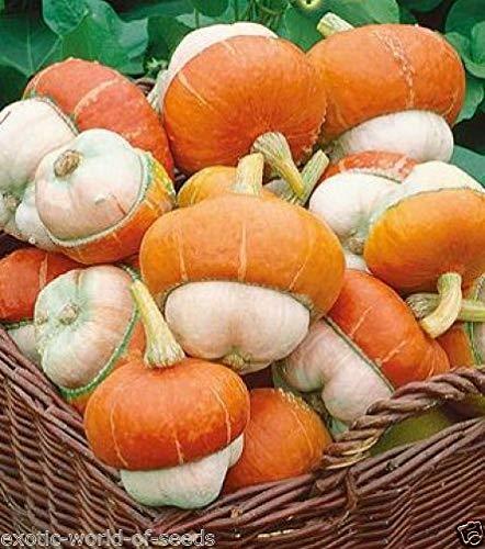 Decorative Ornamental Pumpkin Squash Marrow Seeds Unusual Mushroom Shape ()