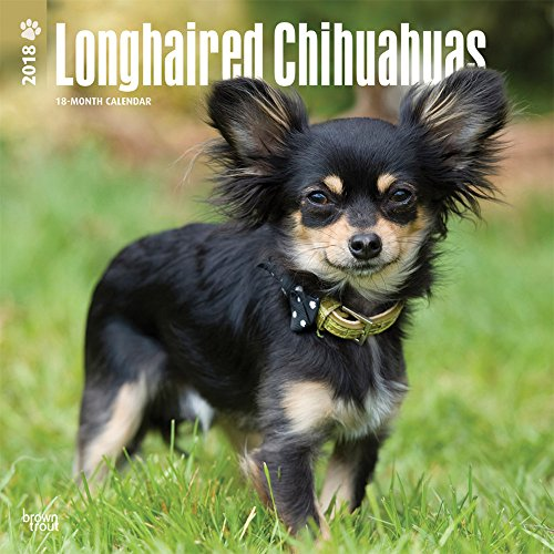 Longhaired Chihuahuas 2018 12 x 12 Inch Monthly Square Wall Calendar, Animals Small Dog Breeds (Multilingual Edition)
