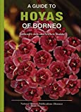 img - for A Guide to Hoyas of Borneo book / textbook / text book
