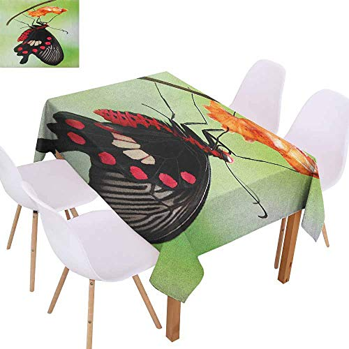 - Marilec Waterproof Tablecloth Swallowtail Butterfly Amazing Moment Coming Out of Cocoon Chrysalis Transformation Table Decoration W52 xL70 Red Black Green