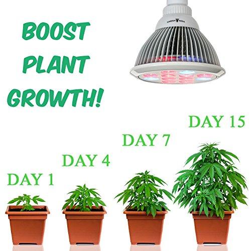 Garden nova led grow light bulb for indoor plants best for Indoor gardening light bulbs