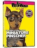 MINIATURE PINSCHER DVD + Dog & Puppy Training