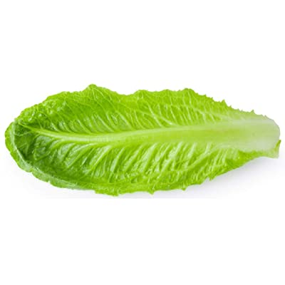 Sow No GMO Lettuce Romaine Parris Island Cos Large Green Leaves Non GMO Heat Tolerant Heirloom Vegetable 100 Seeds : Garden & Outdoor