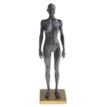 D DOLITY 11\'\' Female Anatomy Figure Ecorche and Skin Anatomy Model ...
