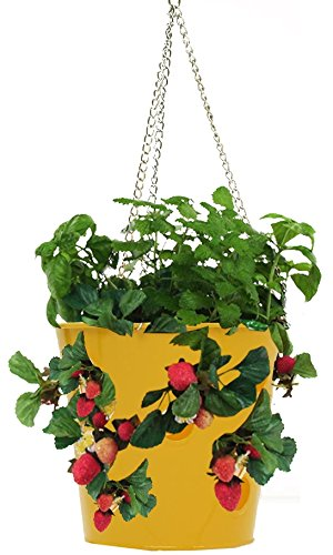 HIT 8396E SAFF Galvanized Hanging Strawberry Herb Floral Planter, Saffron