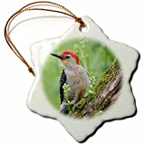 3dRose Danita Delimont - Birds - Red-bellied Woodpecker male in flower garden, Marion County, Illinois - 3 inch Snowflake Porcelain Ornament (orn_259329_1)