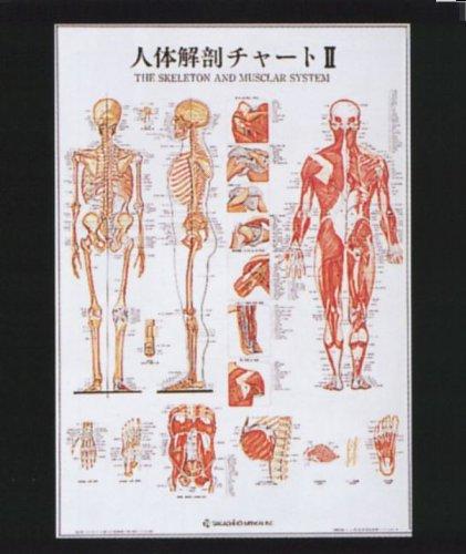 人体解剖チャートⅡ(パネル入)   B009RKGR2O