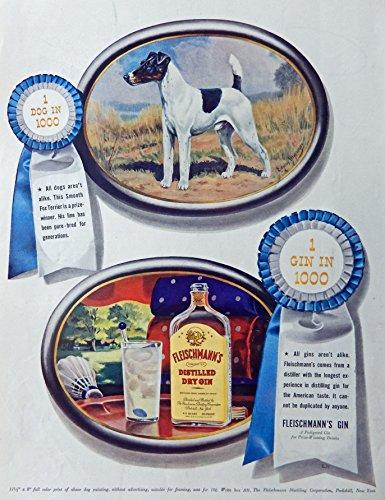 Fleischmann's Dry Gin, 40's Vintage Print Ad. Color Illustration, (Fox Terrier Dog) Original Rare 1941 Life Magazine Art