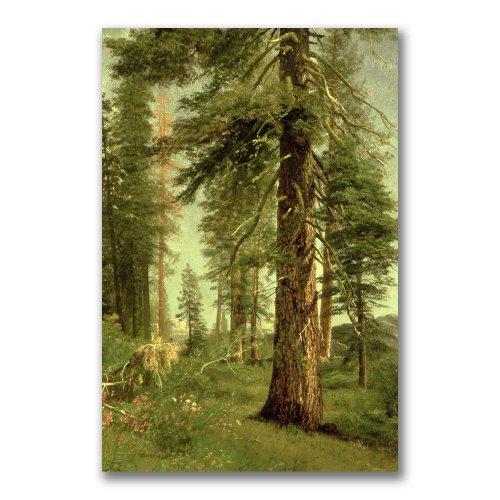 - Trademark Fine Art California Redwoods by Albert Biersdant, 16x24-Inch Canvas Wall Art