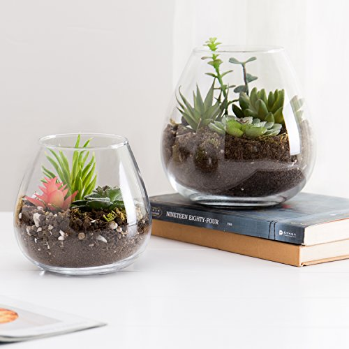 Set of 2 Decorative Modern Round Clear Glass Plant Terrariums/Ornament Display Flower Vases (Glass Bowls Round Flower)