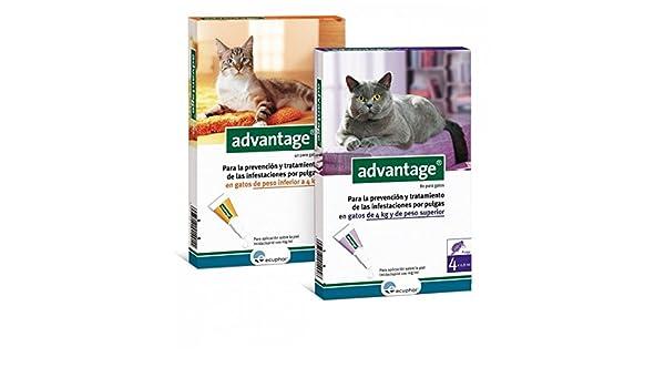 Advantage pipetas antiparasitarias para gatos [2 formatos]: Amazon.es: Productos para mascotas