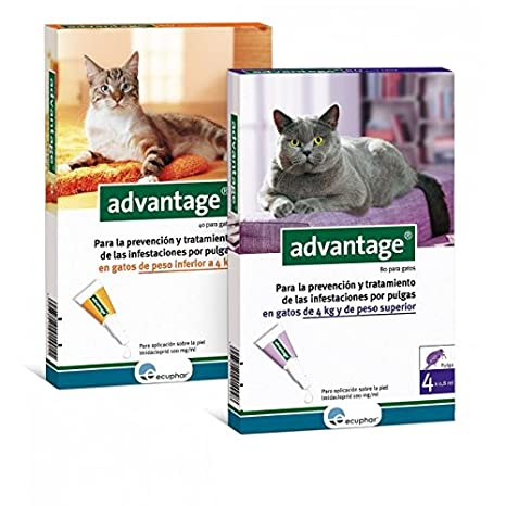 Advantage pipetas antiparasitarias para gatos [2 formatos]: Amazon.es: Productos para mascotas
