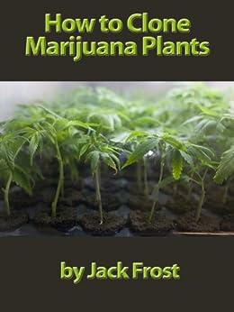 how to make clone marijuana plants