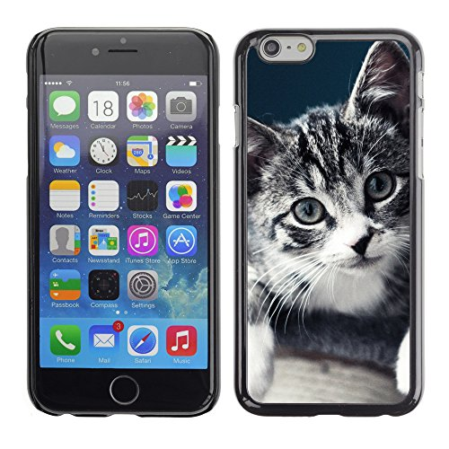 Premio Sottile Slim Cassa Custodia Case Cover Shell // V00003499 chaton s'il vous plaît // Apple iPhone 6 6S 6G 4.7""
