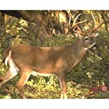 DuraMesh Archery Whitetail 3 Target, Brown, 25'' x 32''