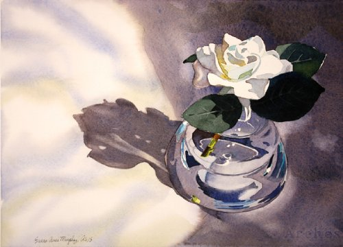 Susan Avis Murphy Gardenia in a Glass Vase, Giclee Print of a Still Life Watercolor Painting, Picture of a White Flower in the Sunlight, 10 X 13 Inches ()