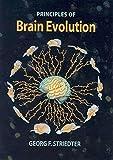Principles of Brain Evolution