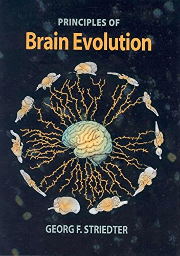Principles of Brain Evolution [Georg F. Striedter] (Tapa Dura)