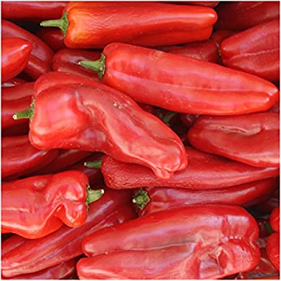 Package of 100 Seeds, Anaheim Chile Pepper (Capsicum annuum) Non-GMO Seeds by Seed Needs