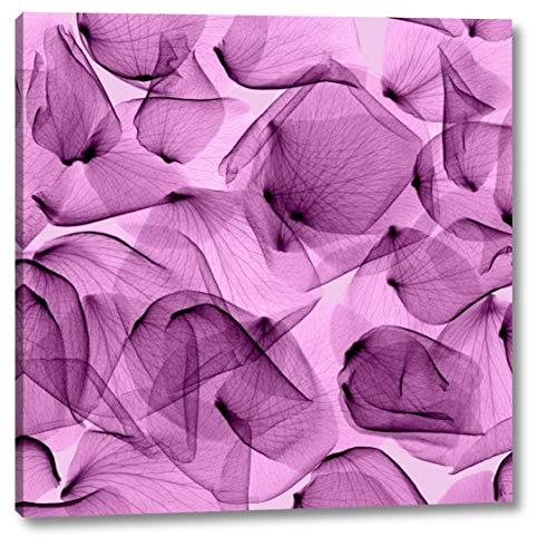 """Rose - Orchid by Steven Meyers - 19"""" x 19"""" Gallery Wrapped Giclee Canvas Print - Ready to Hang"""