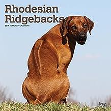 Rhodesian Ridgebacks 2019 Calendar